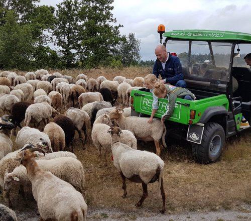 Rentric ingezet voor schapenhoeden